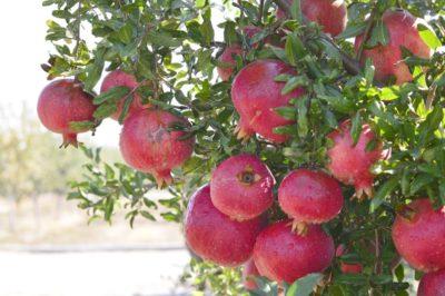 польза для организма женщины - ягоды