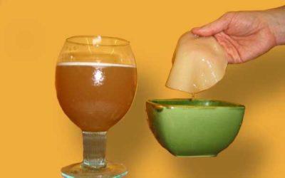 польза и вред для организма - как ухаживать за чайным грибом
