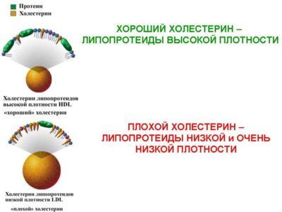 продукты понижающие уровень в крови - плохие и хорошие