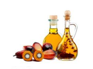 Вредно ли пальмовое масло для человека Пальмоедение