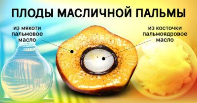 вред для организма человека - плоды