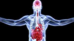 восстановить микрофлору кишечника - исследования