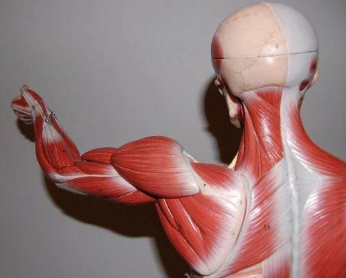 интервальная (периодическая) схема питания для похудения - нарастить мышцы