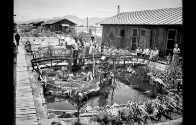 сохранение японской культуры за счет садоводчества