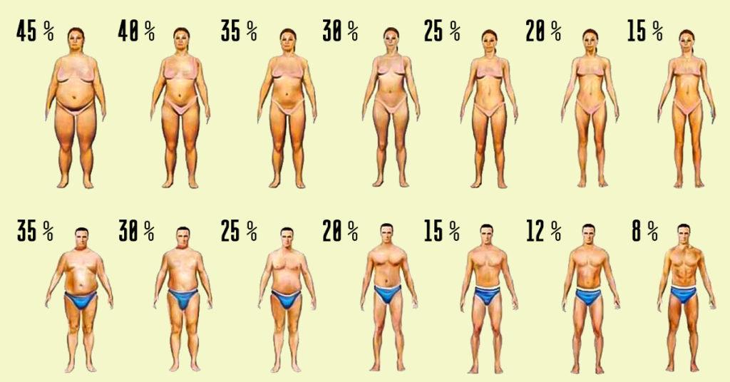вегетарианский расчет калорий