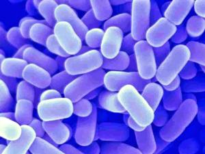 эффективно избавиться - лактобактерии