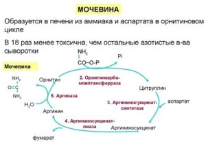 синтез кожного продукта в организме