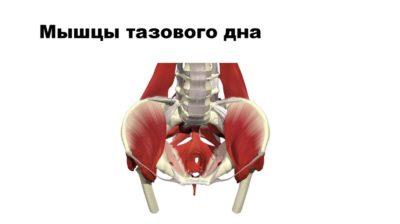 укрепление тазового дна