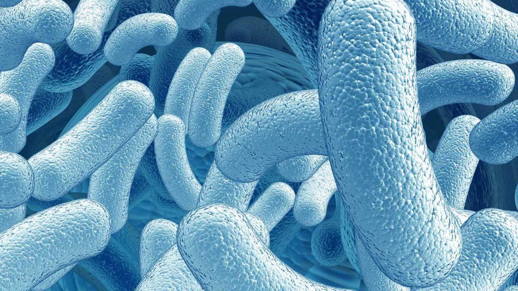 пробиотики - полезные микробы